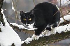 Svart katt på en snöig trädfilial Arkivbilder