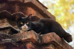 Svart katt på en tegelstenvägg Royaltyfri Bild