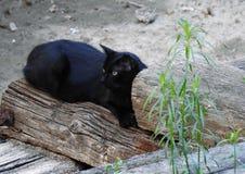 Svart katt på en trästam arkivbild