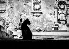 Svart katt på kyrkogård Arkivbilder