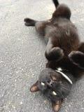 Svart katt på lek Royaltyfri Bild