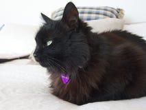 Svart katt på säng royaltyfri fotografi