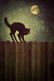 Svart katt på staketet på natten med tappningblick Arkivfoto