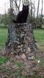 Svart katt på stubbe Arkivbild