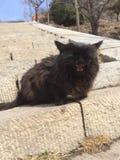 Svart katt på Taishan Royaltyfria Foton