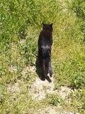Svart katt som bort går 3 royaltyfria bilder