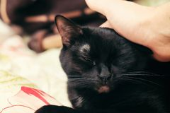 Svart katt som daltas på huvudet arkivbild