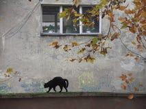 Svart katt som går på en vägg Arkivfoton