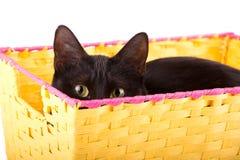 Svart katt som kikar nyfiket över kanten av en gul korg arkivbilder