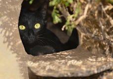 Svart katt som kikar ut från en ask Arkivbild