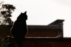 Svart katt som kopplar av på en avsats på solnedgången royaltyfria bilder