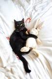 Svart katt som kramar ett välfyllt djur Royaltyfri Fotografi