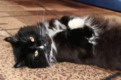 Svart katt som lägger på matta i rum Lat husdjur hemma arkivbilder