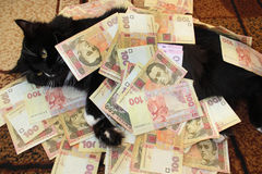 Svart katt som ligger på mattan med pengar Fotografering för Bildbyråer