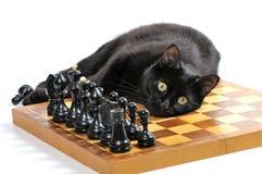 Svart katt som ligger på schackbrädet med isolerade diagram på vit Royaltyfria Foton