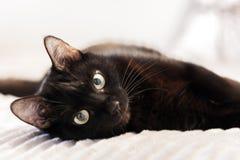 Svart katt som ligger p? den gr?a p?lsr?kningen p? s?ng royaltyfri fotografi