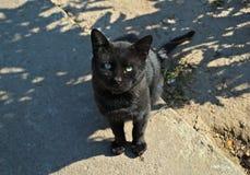 Svart katt som ser mig på en varm sommardag Arkivfoton