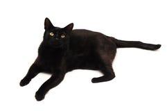 Svart katt som ser upp Royaltyfri Bild
