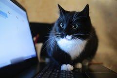 Svart katt som sitter p? en b?rbar dator i rummet Katten ser kameran arkivfoto