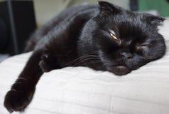 Svart katt som sovande faller Arkivbild