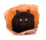 Svart katt som spelar och döljer i en brun pappers- påse arkivbild