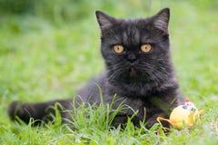 Svart katt som spelar på gräset Royaltyfria Bilder