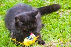 Svart katt som spelar på gräset Royaltyfri Foto