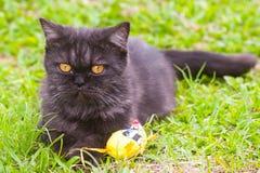 Svart katt som spelar på gräset Arkivbild