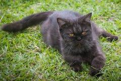 Svart katt som spelar på gräset Arkivfoto