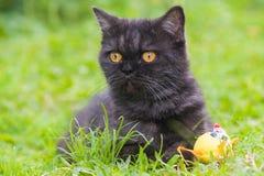 Svart katt som spelar på gräset Arkivbilder
