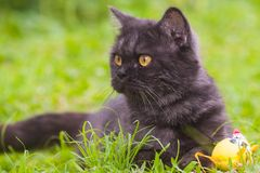 Svart katt som spelar på gräset Royaltyfria Foton