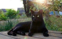 Svart katt utomhus Fotografering för Bildbyråer
