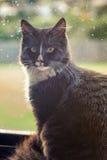 Svart katt vid fönstret Arkivfoton