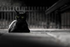 Svart katt vid natt Fotografering för Bildbyråer