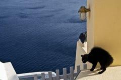 svart kattdefensiv poserar santoriniväggen fotografering för bildbyråer