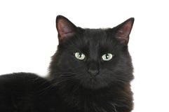 svart kattframsida Fotografering för Bildbyråer