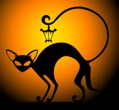 svart kattlampa Royaltyfria Bilder