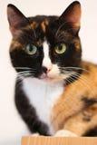 svart kattorange Arkivbild