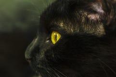 Svart kattstående Royaltyfria Foton