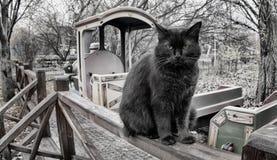 svart kattstående Fotografering för Bildbyråer