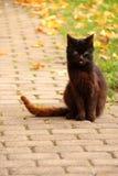 svart kattstenläggning Arkivbild