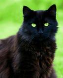 svart kattstirrande Arkivbilder