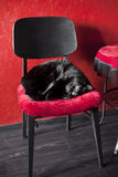 svart kattstolsred Royaltyfri Foto