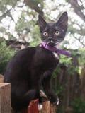 svart kattunge arkivfoton