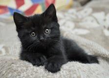 Svart kattunge Royaltyfri Foto