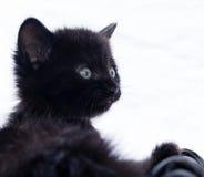 svart kattunge Royaltyfri Fotografi