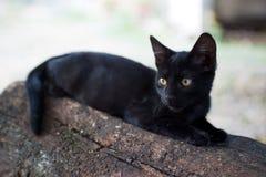 svart kattunge Arkivbild