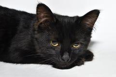 svart kattunge Fotografering för Bildbyråer