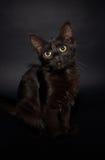 svart kattunge Royaltyfria Foton