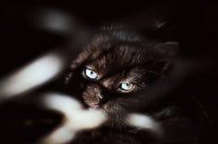 Svart kattunge bak stänger Royaltyfria Foton
